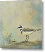 Shore Bird 2945 Metal Print