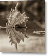 Shore Shell In Sepia Metal Print