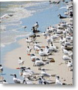 Shorebird Gathering Metal Print