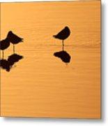 Shorebirds On The Sea At Sunrise Metal Print