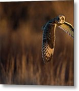 Short-eared Owl Banking Metal Print