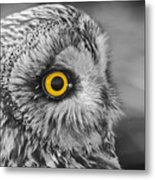 Short-eared Owl Mono Coloured Eye Metal Print