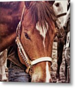 Showmanship Metal Print
