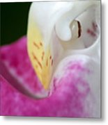 Showy Ladyslipper Up Close And Personal Metal Print