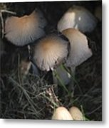 Shrooms 1 Metal Print