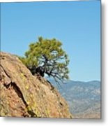 Shrub And Rock At Canon City Metal Print