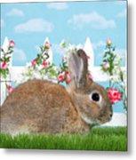 Shy Brown Dwarf Bunny Portrait Metal Print