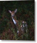 Shy Fallow Deer 4 Metal Print