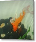 Siamese Fighting Fish 1 Metal Print