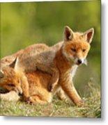 Sibbling Love - Playing Fox Cubs Metal Print