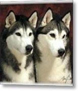 Siberian Huskies Related Metal Print