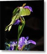 Siberian Iris And Luna Moth Metal Print