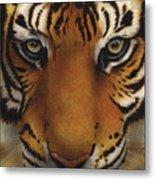 Siberian Tiger I Metal Print