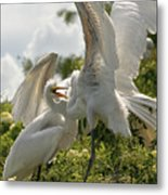 Sibling Squabble Metal Print by Christopher Holmes