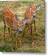 Siblings Visit Metal Print