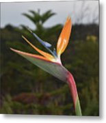 Side View Of A Beautiful Bird Of Paradise Flower  Metal Print