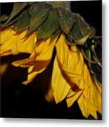 Sideview Sunflower Metal Print