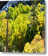 Sierra Fall Forest Metal Print