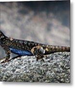 Sierra Fence Lizard 2 - Sierra Metal Print