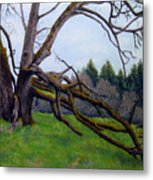 Signature Oak Metal Print