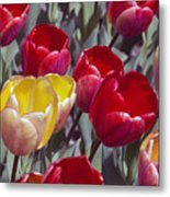 Signs Of Sping  Metal Print