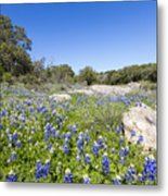 Signs Of Spring In Texas Metal Print