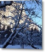 Silence In The Trees Yosemite Metal Print