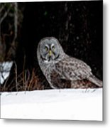 Silent Hunter Metal Print