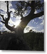 Silhouette Of A Gnarled Tree Metal Print