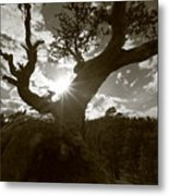 Silhouette Of A Gnarled Tree - Sepia Metal Print
