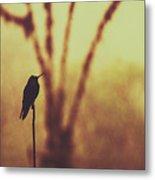 Silhouette Of A Hummingbird Against Golden Background, Mindo, Ecuador Metal Print