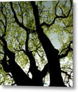 Silhouette Of A Tree Trunk With New Growth In Springtime Metal Print