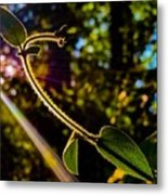 Silhouette Of Climbing Vine On A Sunny Afternoon Metal Print