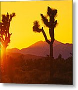 Silhouette Of Joshua Trees Yucca Metal Print