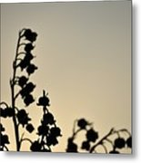 Silhouette Of Lilies Of The Valley 2 Metal Print
