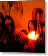 Silhouette Of Papyrus At Sunset Metal Print
