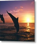 Silhouette Of Two Bottlenose Dolphins Metal Print
