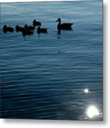 Silhouetted Duck Family Swims Metal Print by Todd Gipstein