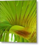 Silk Floss Palm Metal Print