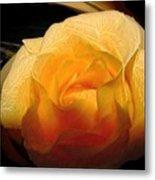 Silken Yellow Rose Metal Print