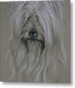 Silky Terrier Metal Print