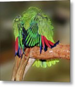 Silly Amazon Parrot Metal Print