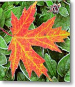 Silver Maple Frost Metal Print