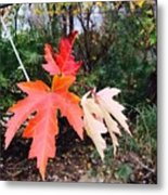 Silver Maple In Red Metal Print