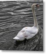 Silver Swan Metal Print