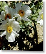 Silver Terrace Virginia City Nevada Flowers Metal Print