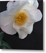 Silver Waves Camellia Metal Print