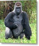 Silverback Gorilla 2 Metal Print