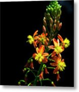 Simple Beauty Iv Metal Print