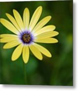 Simple Flower Metal Print